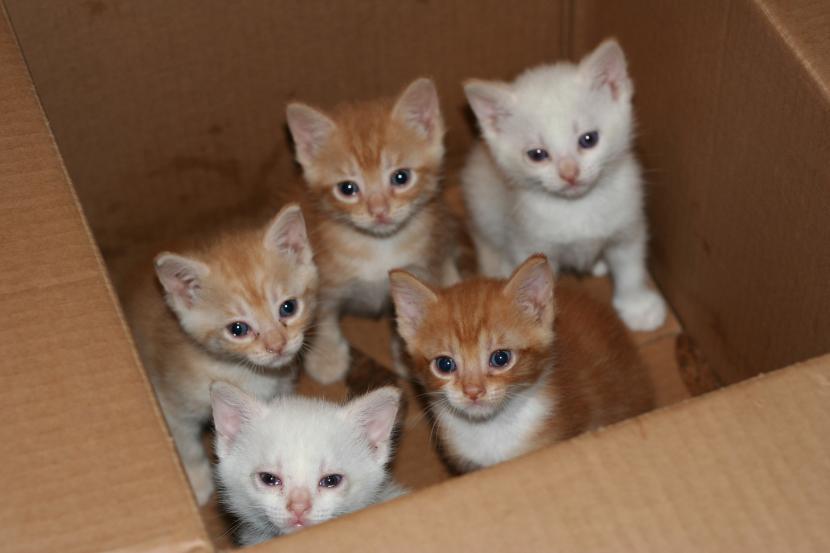 Gatitos en caja