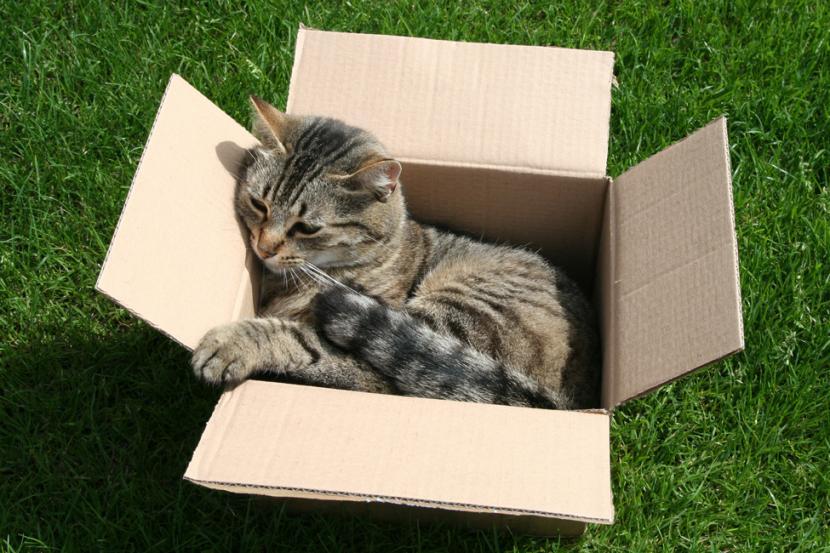 Gato en caja