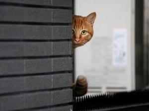Gato escondido tras la puerta