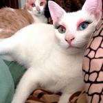 Gatos maquillados