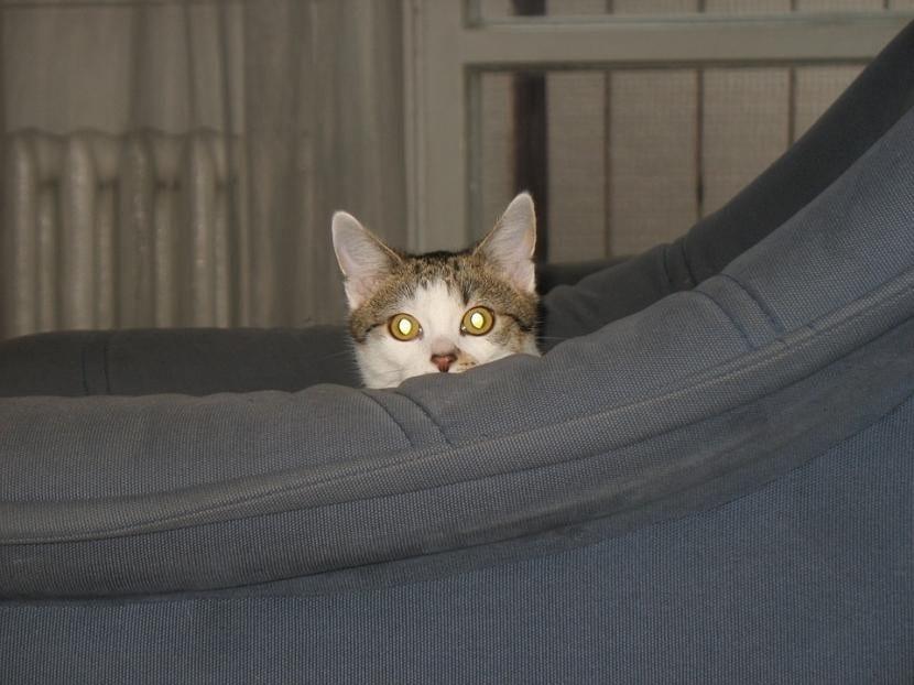 Por qué se esconde mi gato