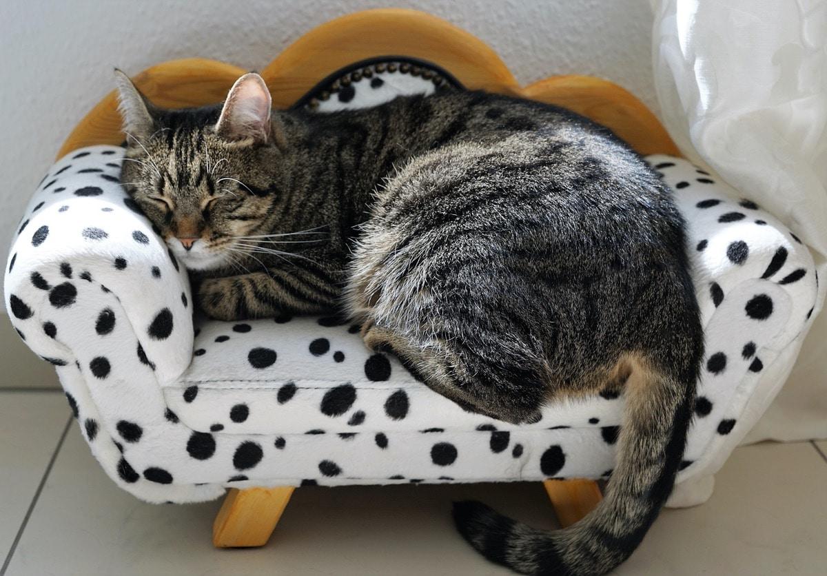 A veces hay que llevar al gato al veterinario si tiene gases