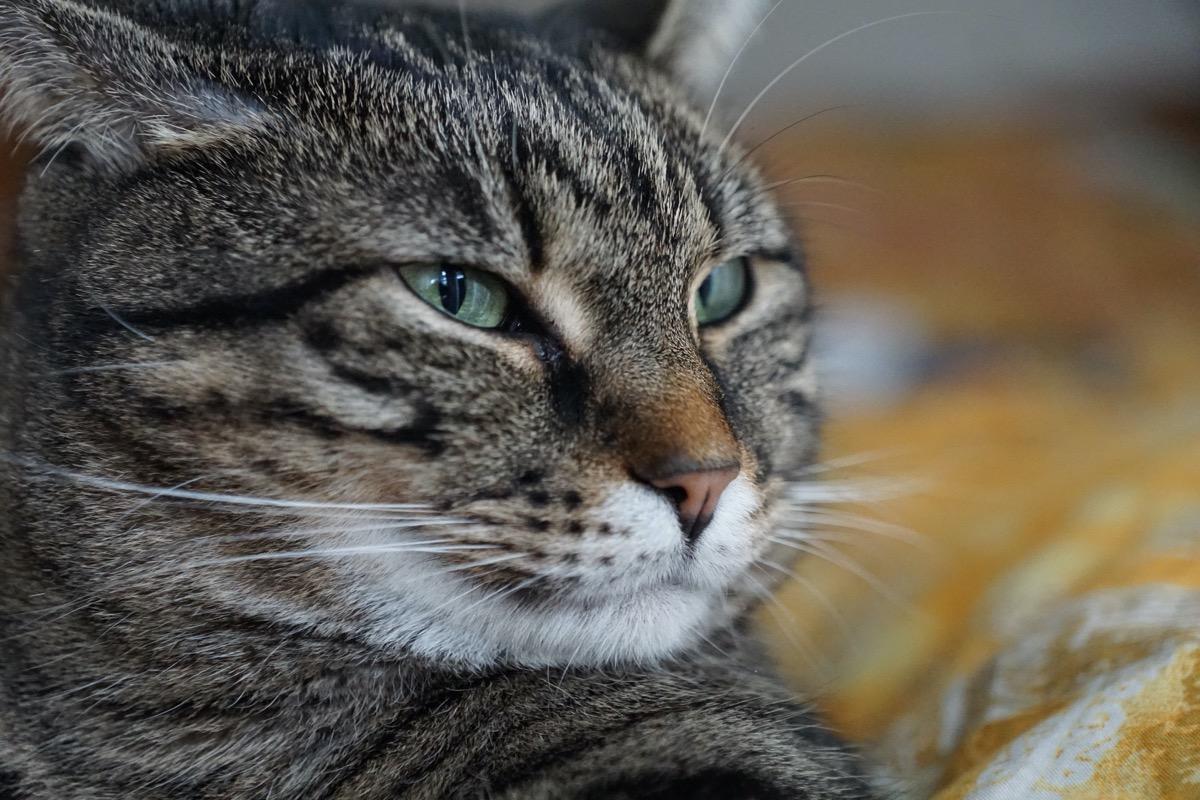 Los gases son muy molestos para los gatos
