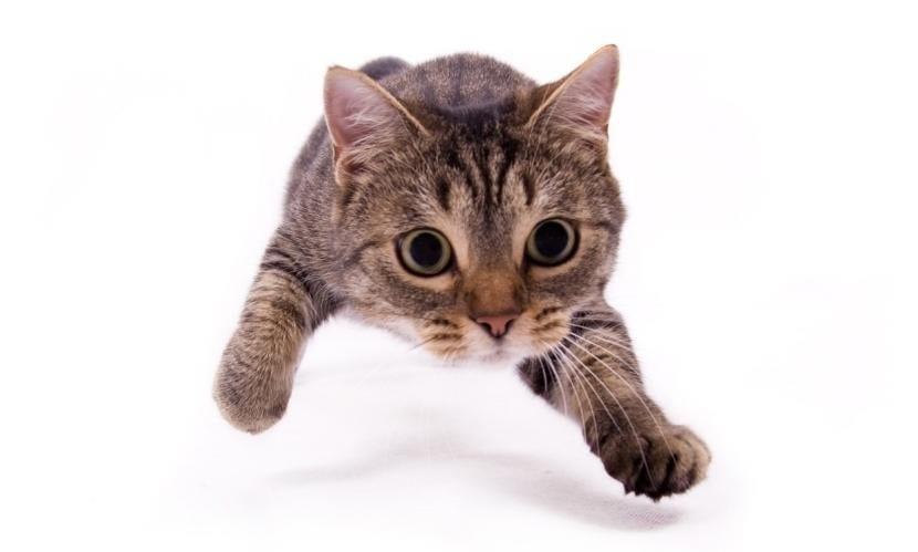 Gato atacando
