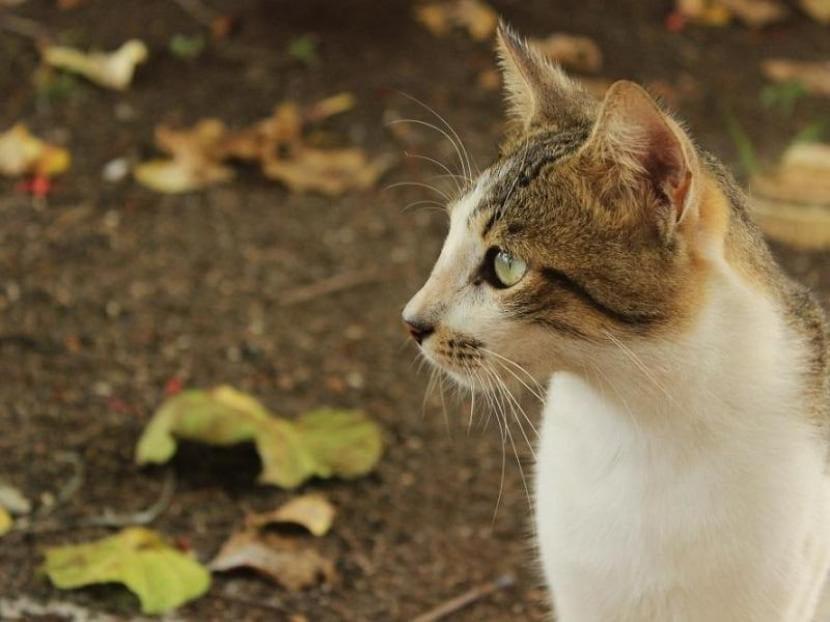 Gato bicolor en la calle