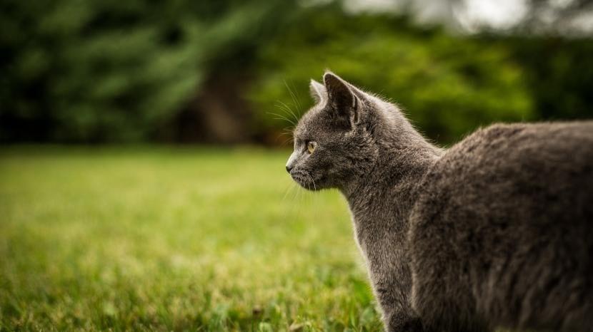 Gato en el campo