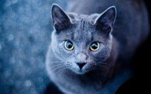 Gato exterior
