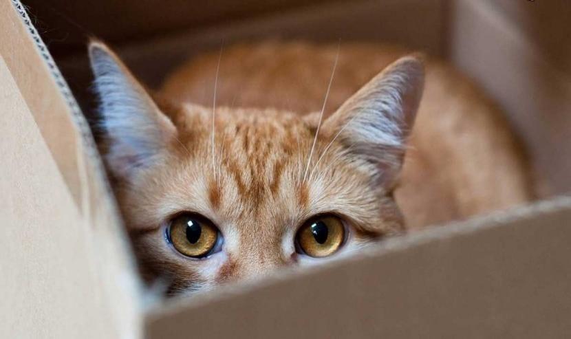 Gato marrón en una caja