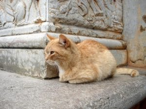 Gato naranja abandonado