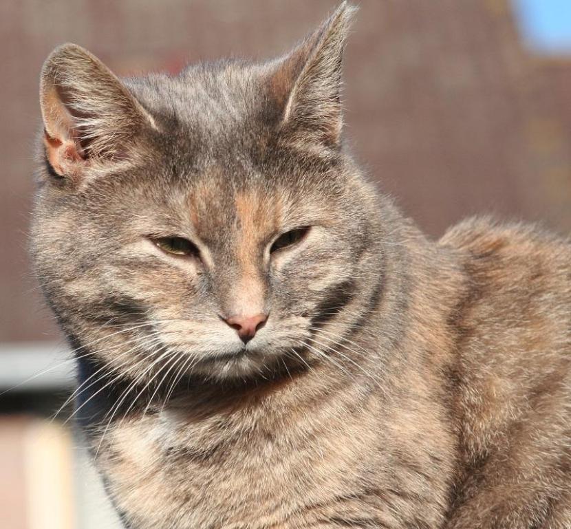 gato añoso adelgaza