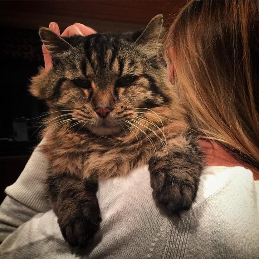 Gato viejo con su humano
