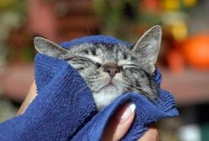 Secando a un gato después del baño