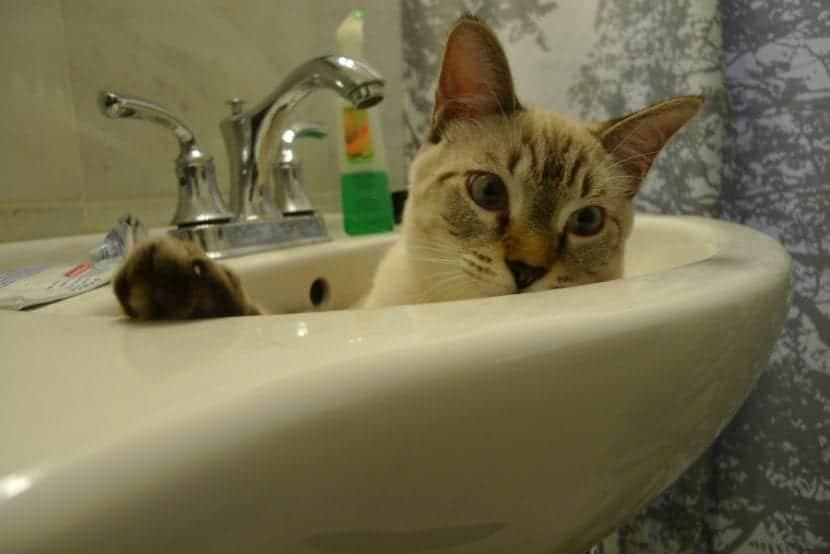Baño del gato