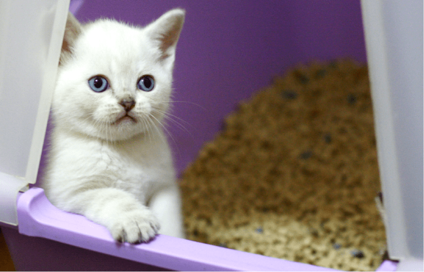 Gatito en bandeja higiénica