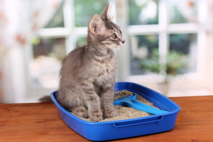 Gatito en la caja