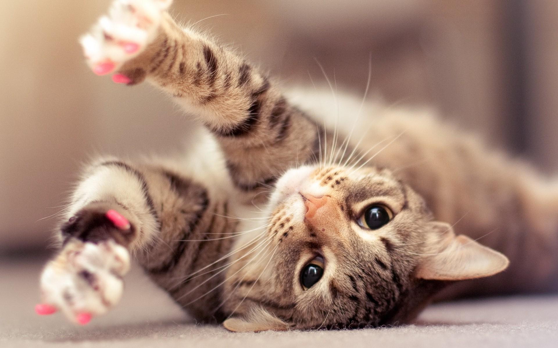 Los gatos oyen mejor que los humanos