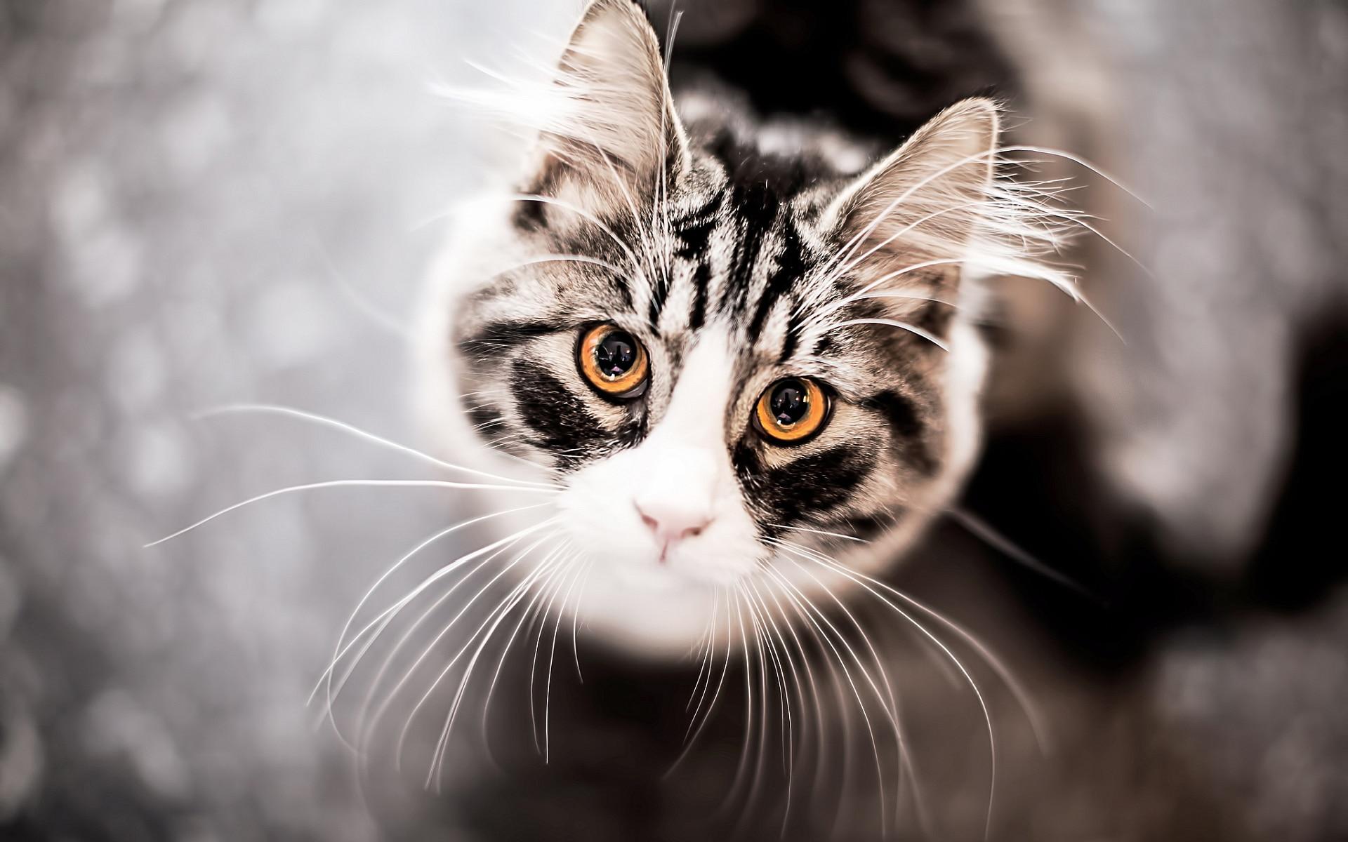 Las orejas del gato son curiosas