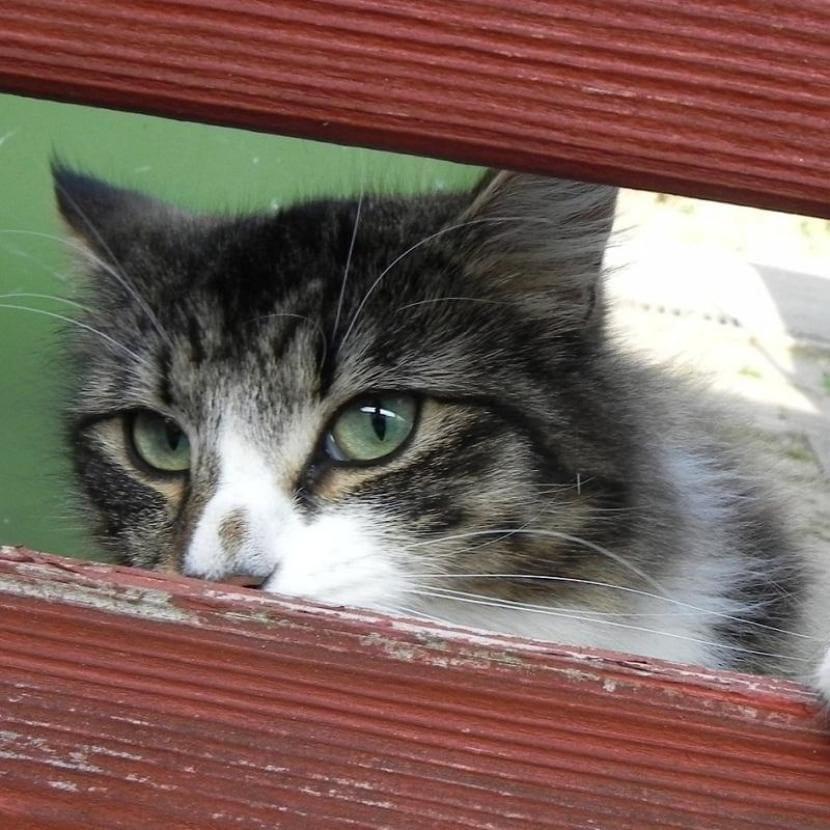 Gato con miedo