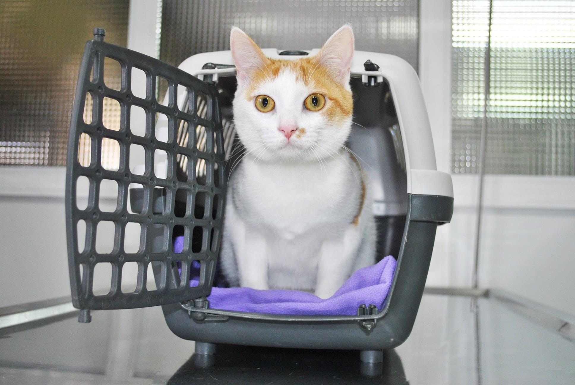 Gato en transportín