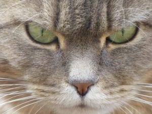 Gato observando