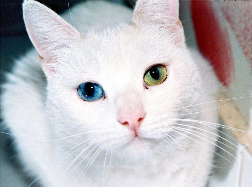 Ojos azul y verde