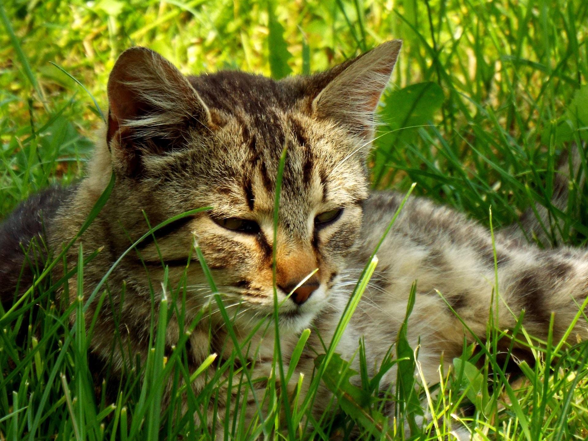 Descubre cómo hacer vomitar a un gato