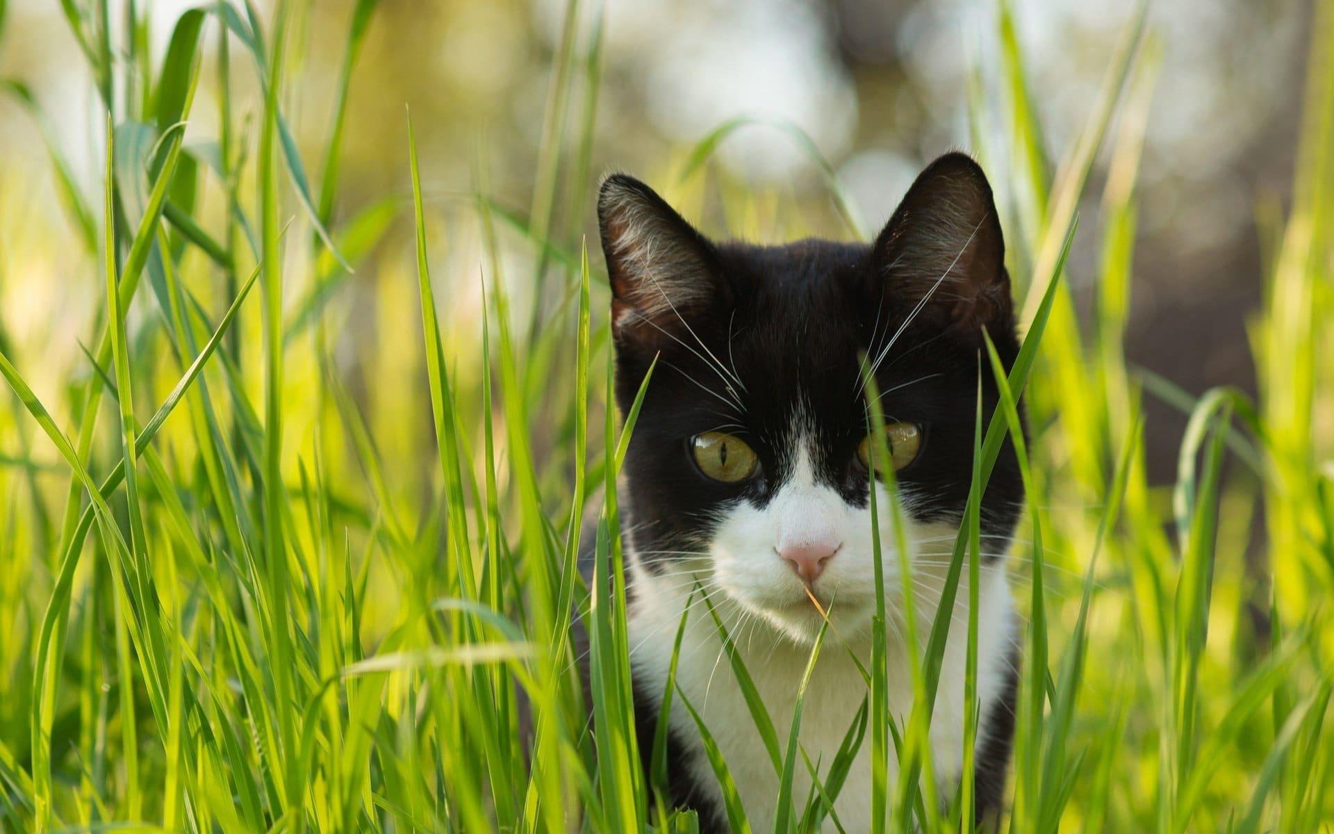 El vómito puede ayudar al gato a seguir adelante