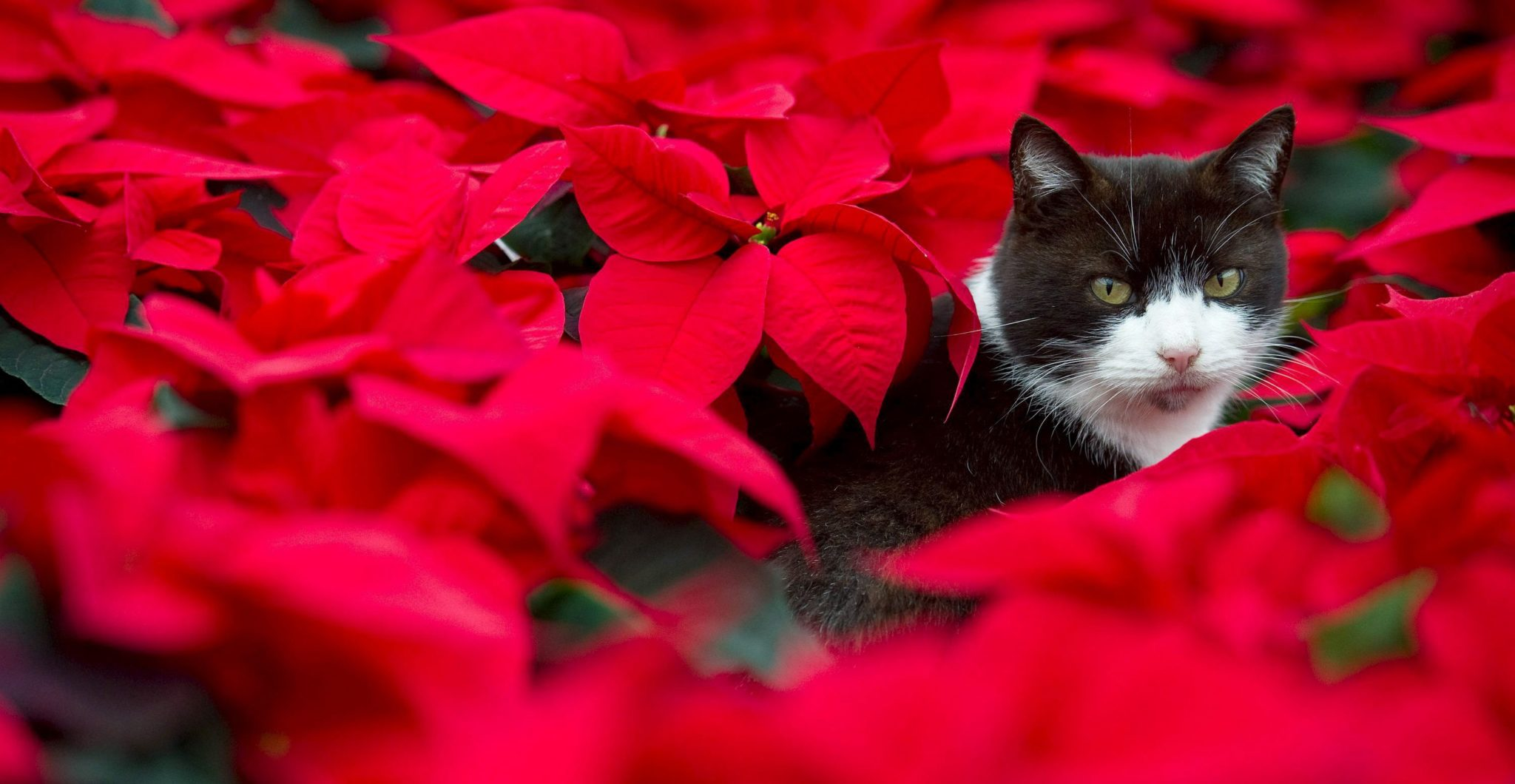 Algunas plantas son tóxicas para gatos