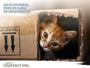 El gato puede desaparecer