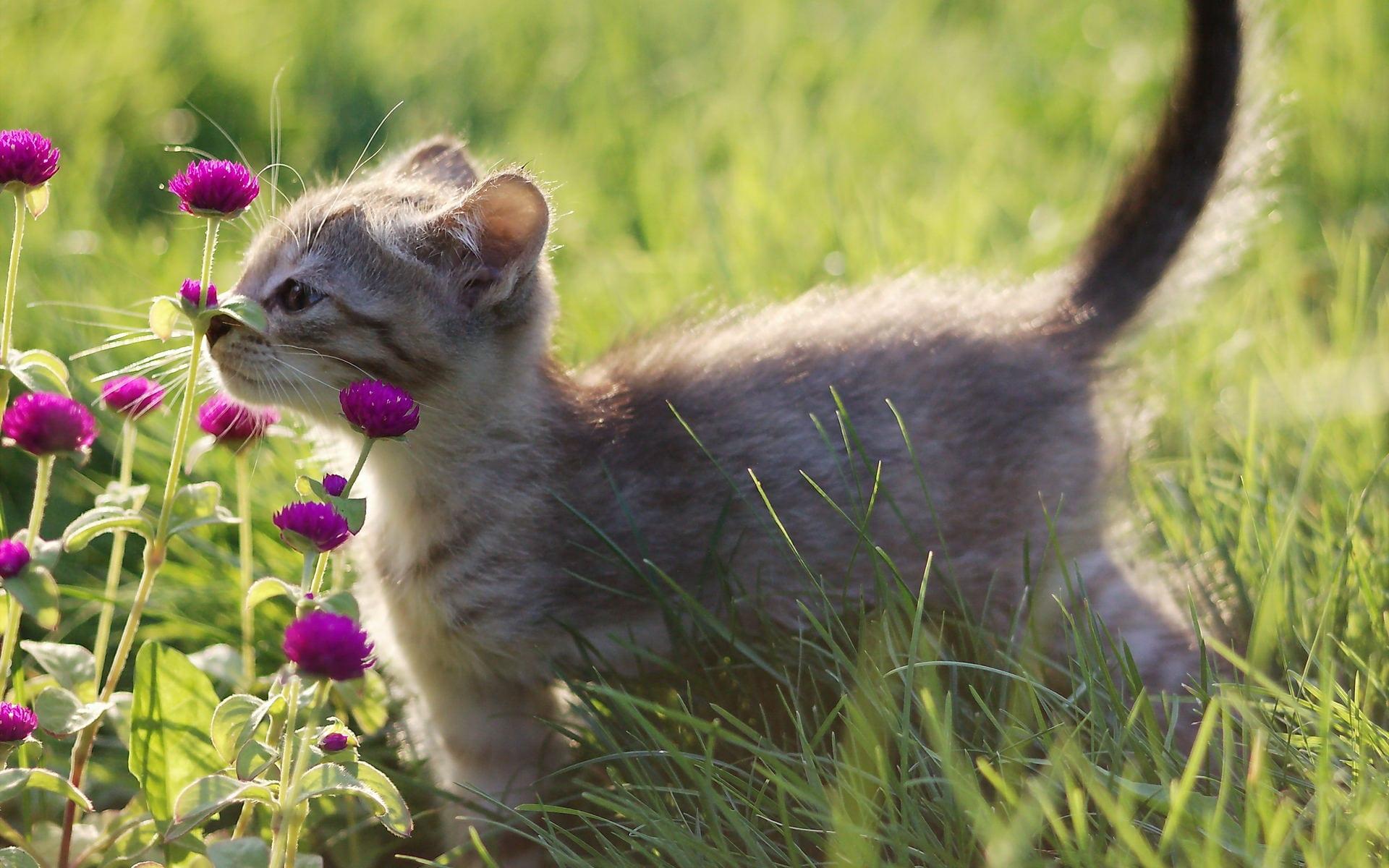 Gatito oliendo flores