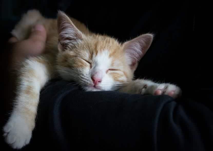 Gato durmiendo en el sofá