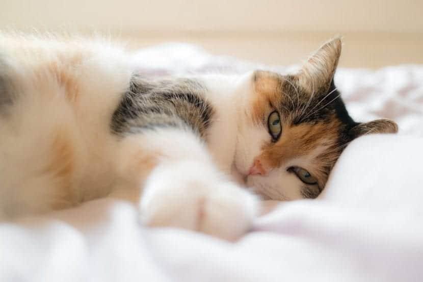 Dejar que el gato duerma con nosotros puede reducir el riesgo de que padezca faringitis