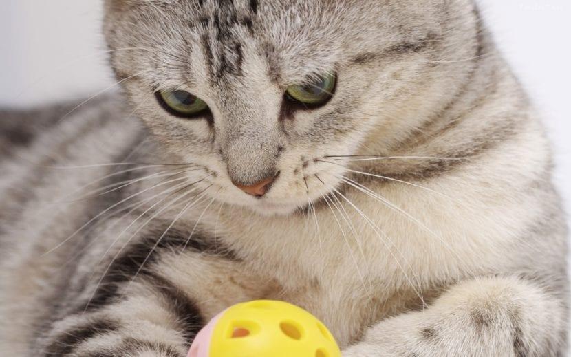 Gato jugando con bola