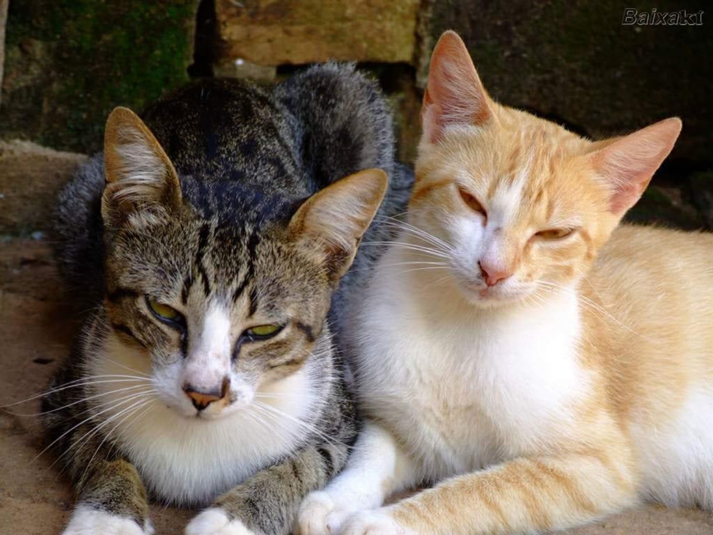 gatos_tranquilos