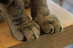Patas de gato