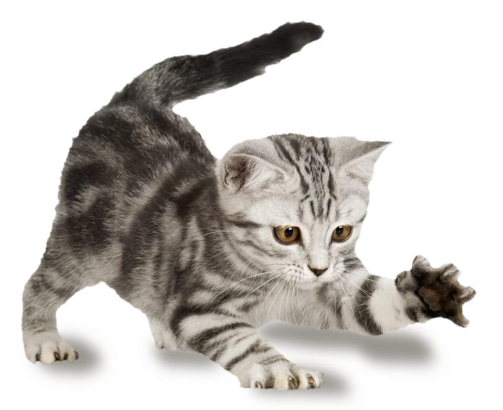 3 Cosas Que No Sabías Sobre Los Gatos