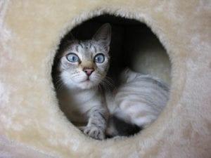 Gatito en rascador