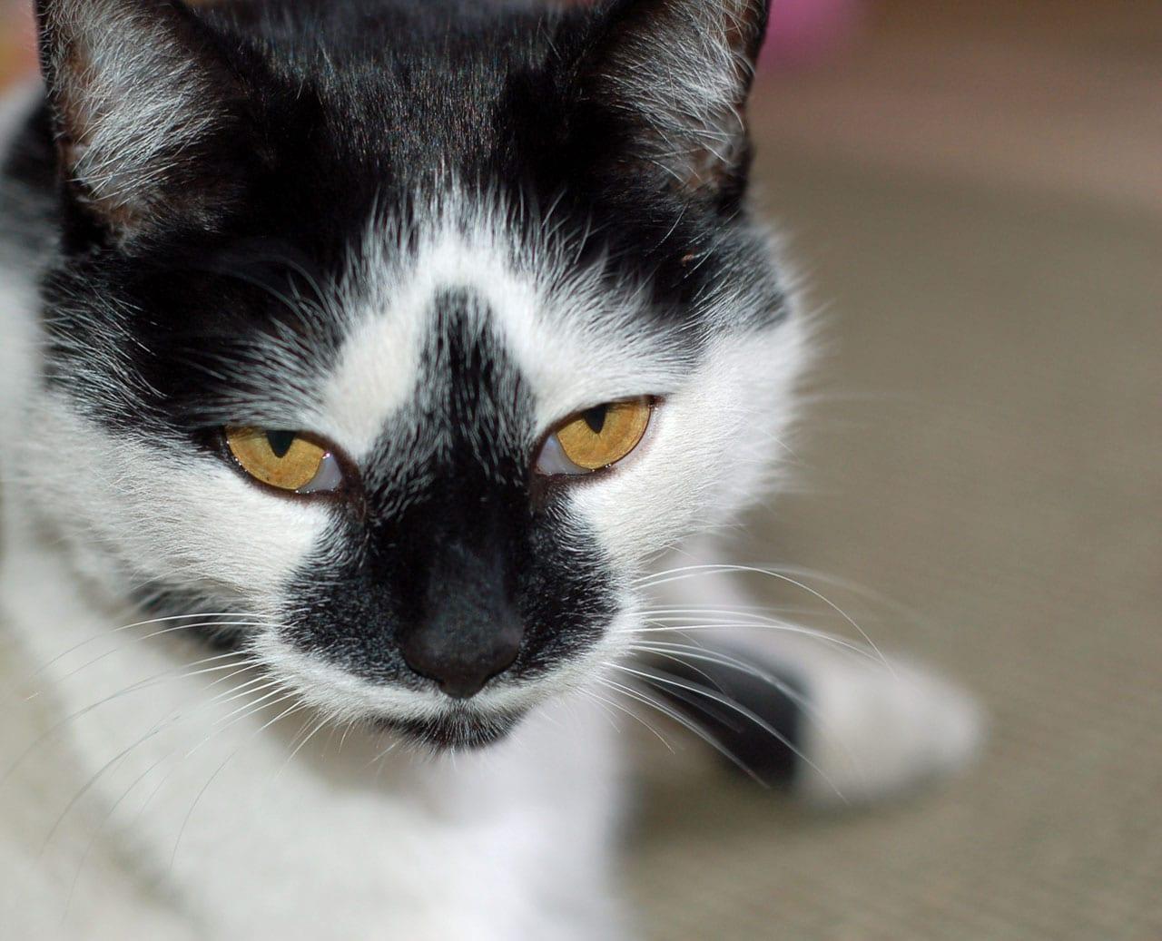 Cómo Tratar El Estreñimiento En Gatos Noti Gatos