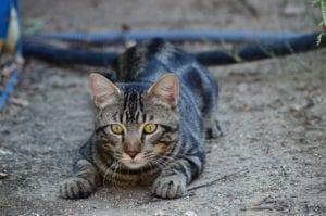 Gato cazando