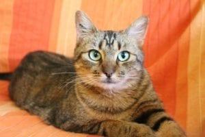 Gato en sofá