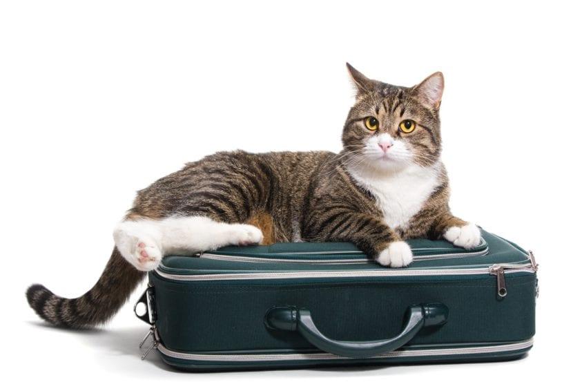 Gato encima de la maleta