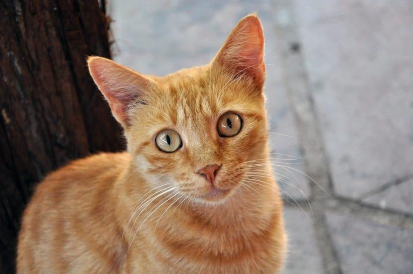 Gato naranja en la calle