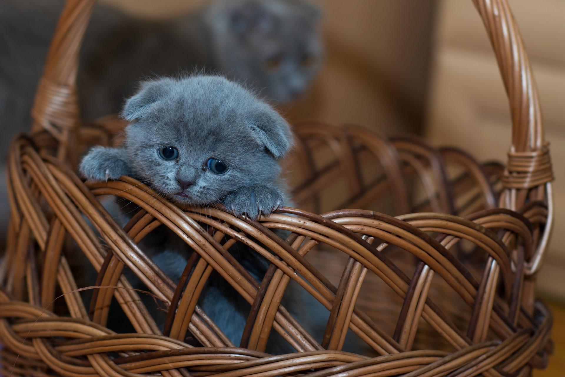 El gatito debe comer alimento de calidad