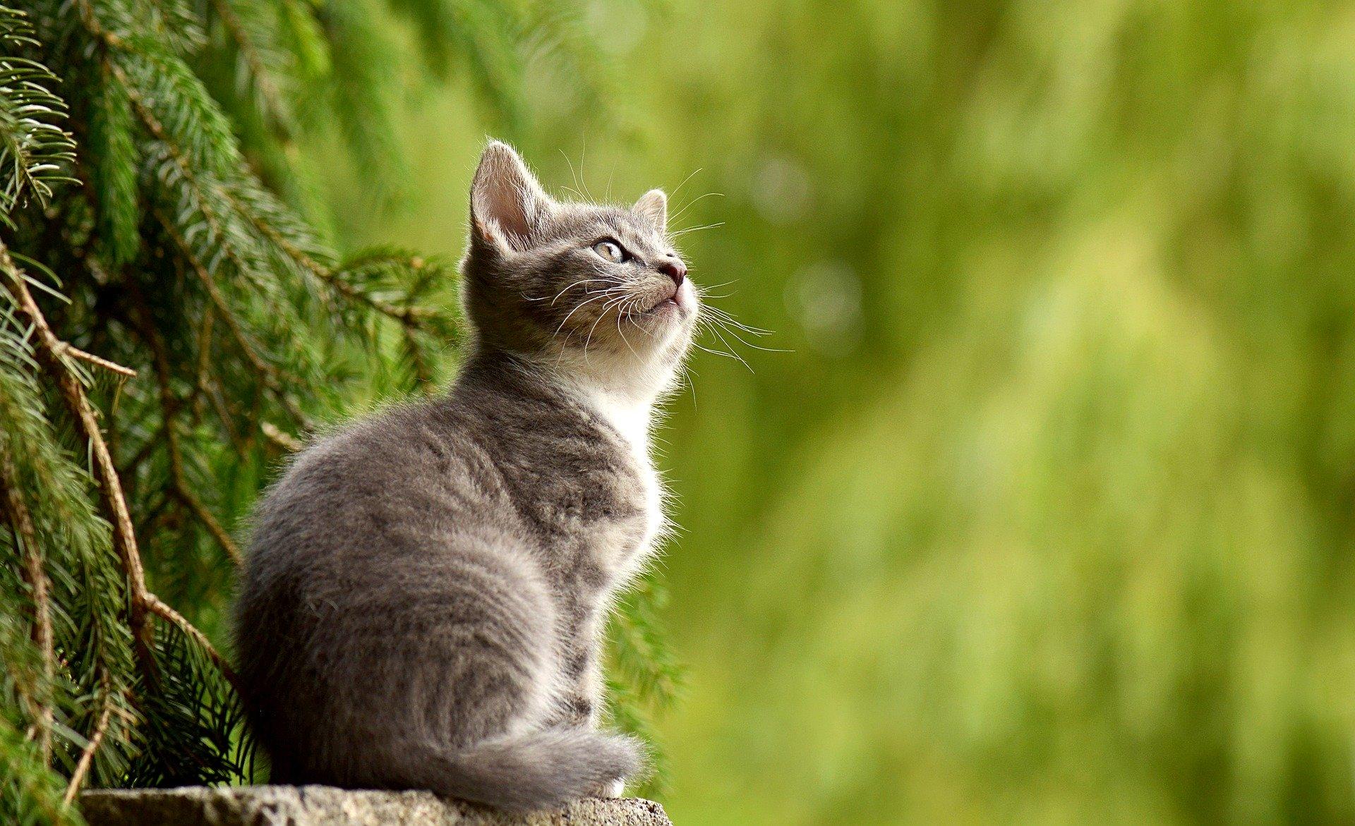 Hay gatos que no se dejarán acariciar