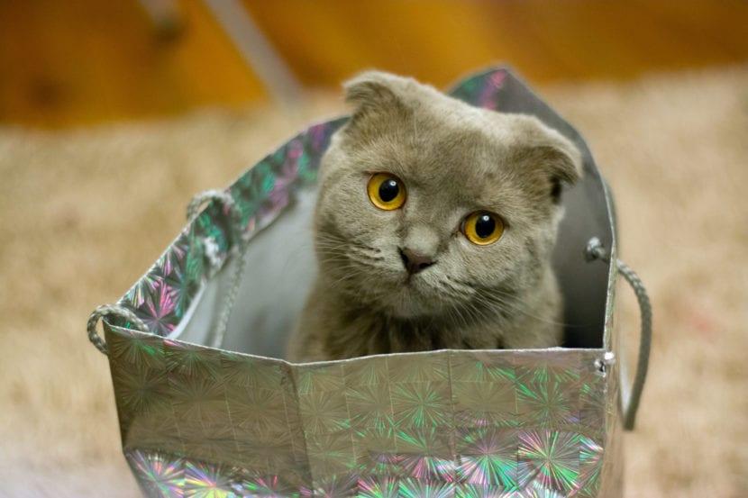 Gatito en bolsa