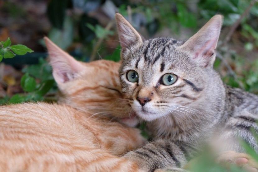 Gatitos en el exterior