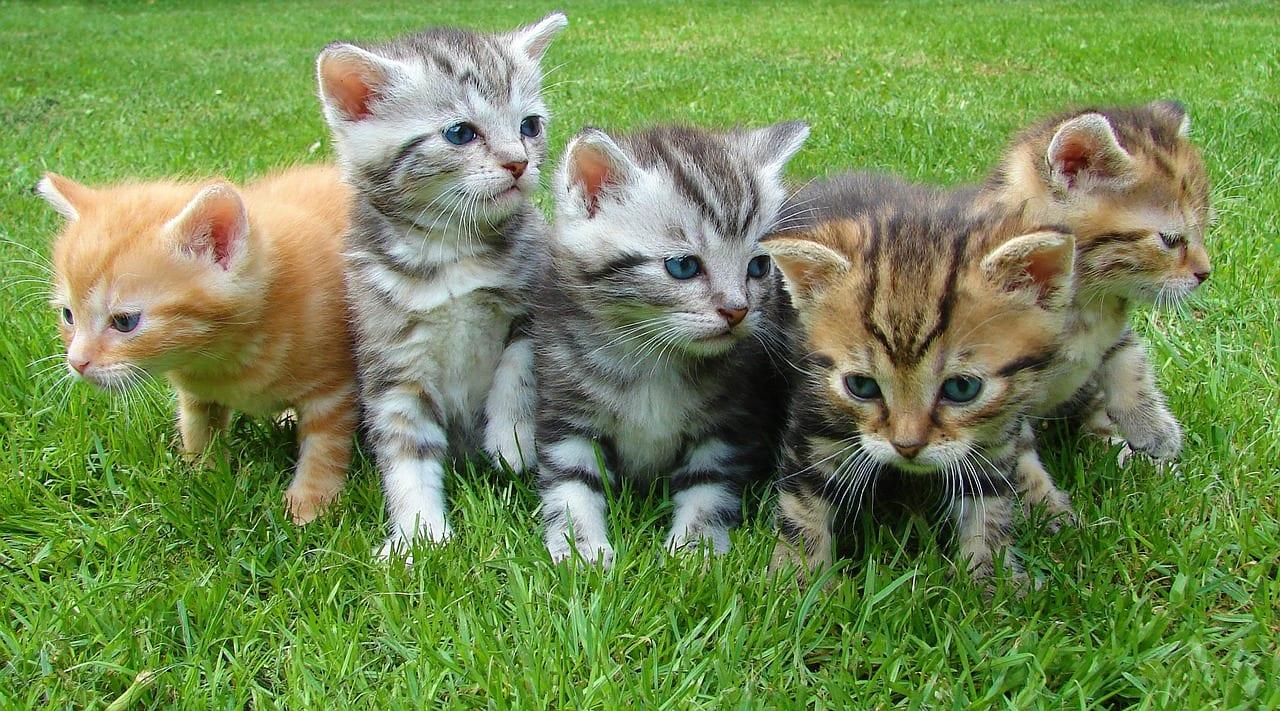 Los gatitos son traviesos por naturaleza
