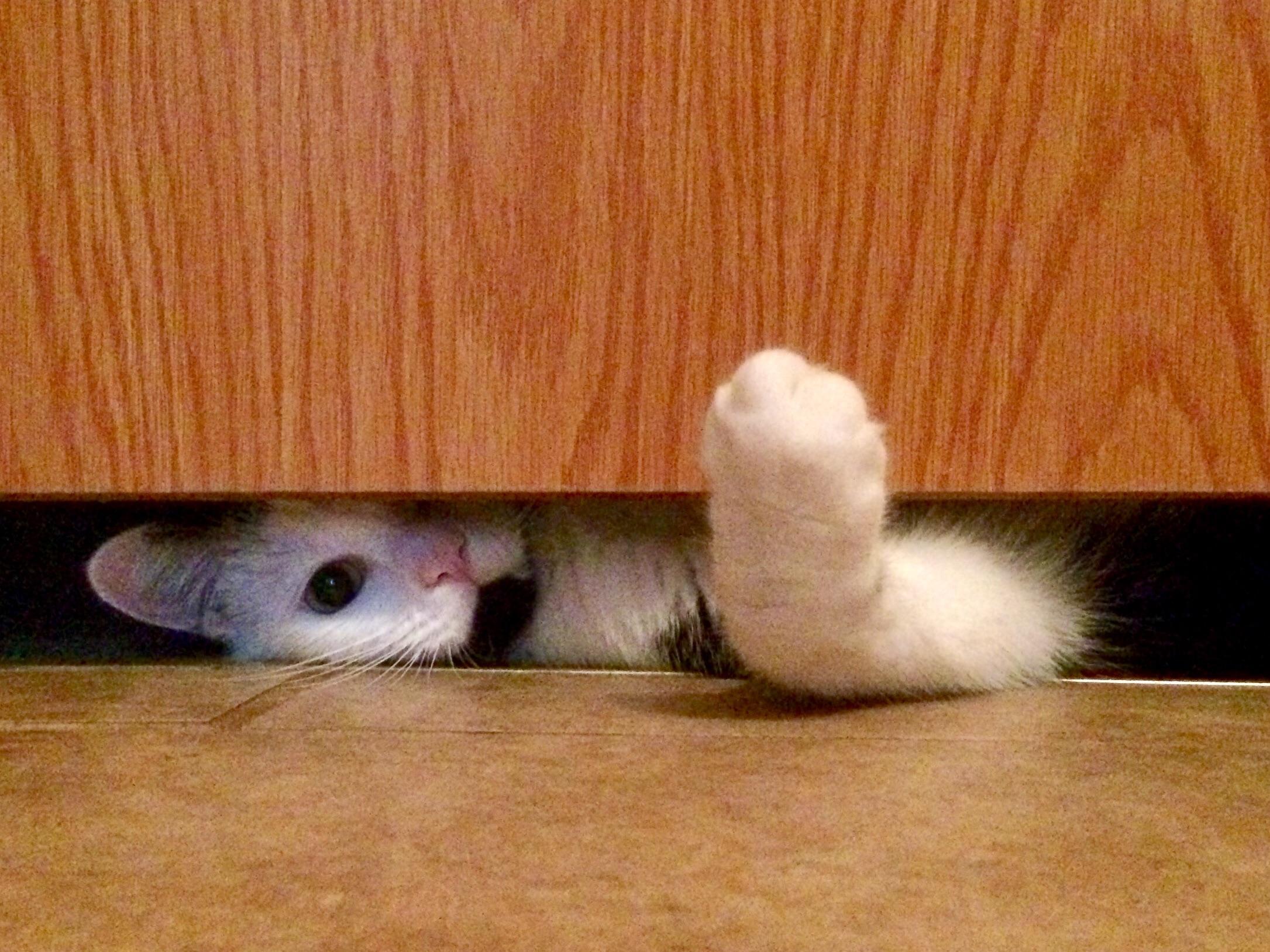 A los gatos les disgustan las puertas cerradas