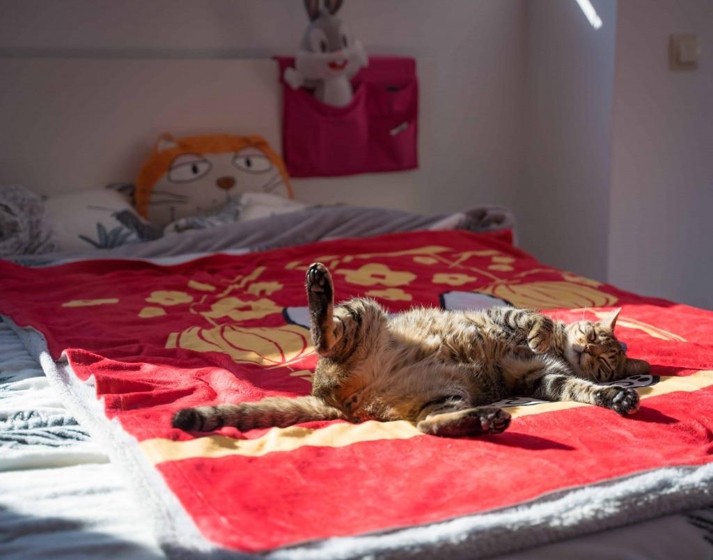 Los gatos son animales muy limpios