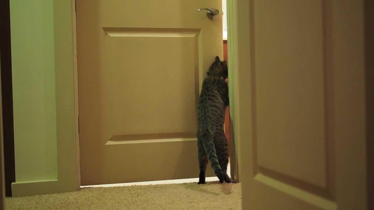 Los gatos no quieren puertas cerradas